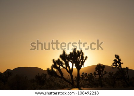 joshua trees with mountains in golden sunset