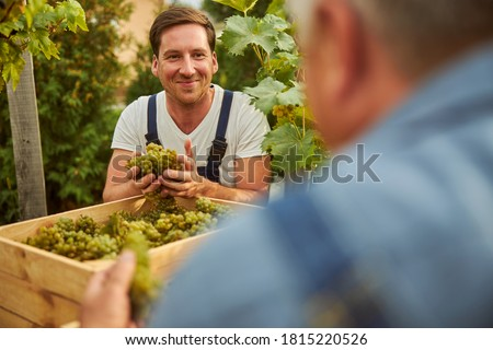 Joyful young man holding handfuls of ripe grapes and smiling while looking at an unrecognised man Foto stock ©