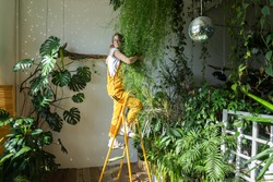 Joyful young woman gardener in orange overalls standing on a stepladder, embracing lush asparagus fern houseplant in her flower store. Greenery at home. Love of plants. Indoor cozy garden.