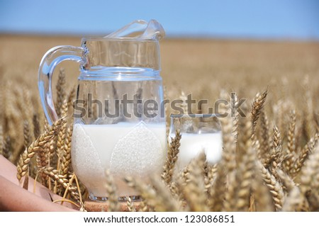 Jug of milk against wheat field