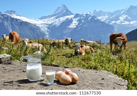 Jug of milk and bread against herd of cows. Jungfrau region, Switzerland