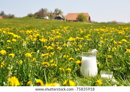 Jug of milk on the spring meadow. Emmental region, Switzerland
