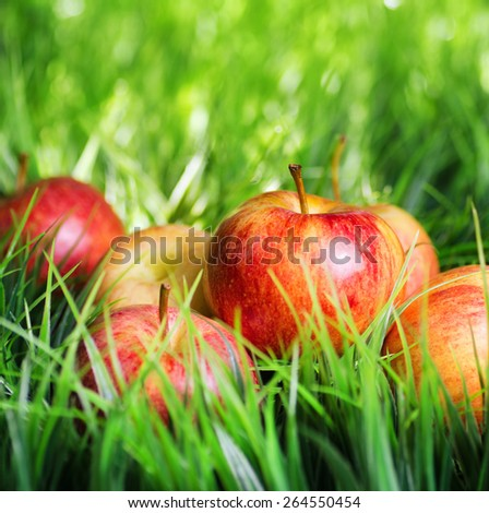 Juicy fresh red apples on green grass. Healthy eco food rich in minerals and vitamins. Product of organic farming.