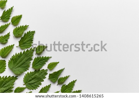Juicy green nettle leaves on white background. Minimal concept, copy space.
