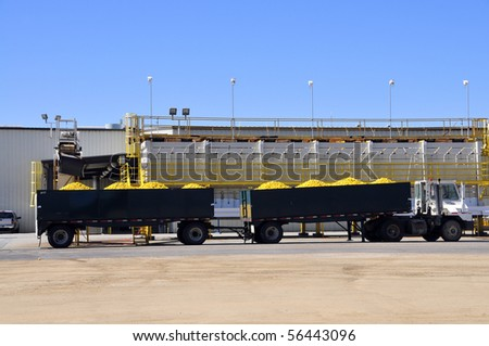 Juicy lemons are loaded onto trailers at a California processing plant - stock photo