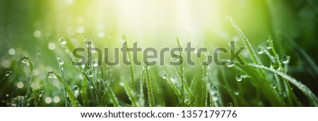 Juicy lush green grass on meadow with drops of water dew in morning light in spring summer outdoors close-up macro, panorama. Beautiful artistic image of purity and freshness of nature, copy space. #1357179776