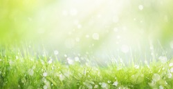 Juicy lush green grass on meadow with drops of water dew sparkle in morning light, spring summer outdoors close-up, copy space, wide format. Beautiful artistic image of purity and freshness of nature.