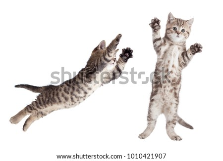 jumping cat set isolated - Shutterstock ID 1010421907