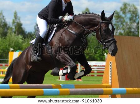 Jumping horse portrait