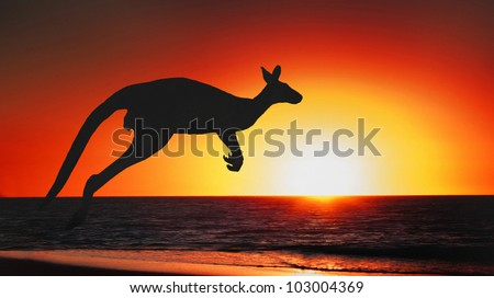 Jumping kangaroo at sunset of australia