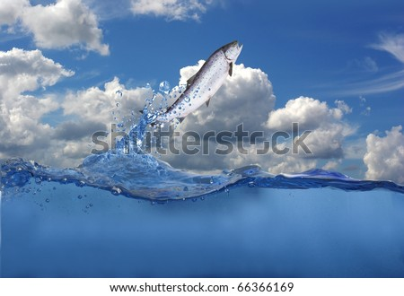 jumping out from water salmon  on sea background