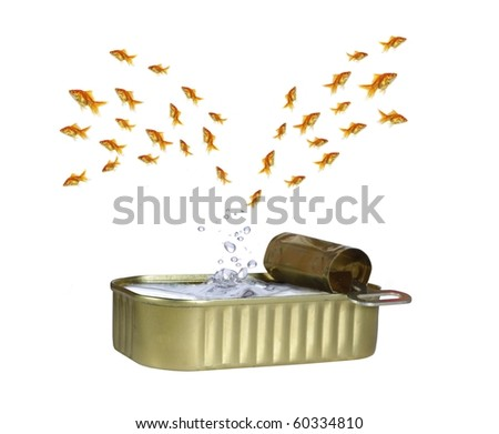 jumping out shoal of fish from water