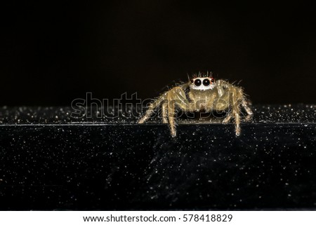 Jumping spider gold on black background. #578418829