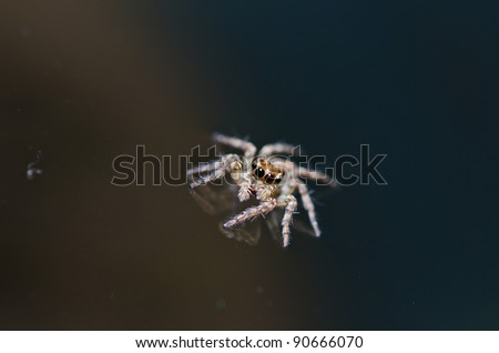 jumping spider in green nature or in the garden