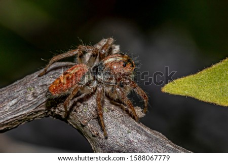 Jumping Spider on the Branch Foto stock ©