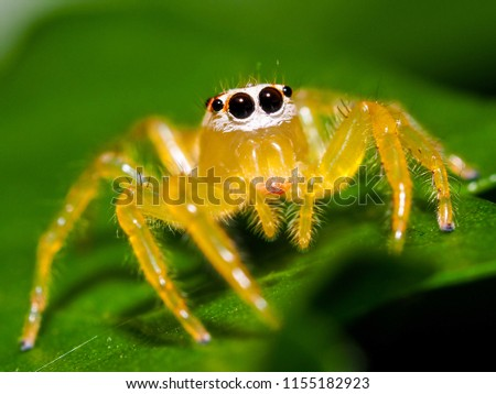 Jumping spider. Spider. Spider macro photography and blurred background.