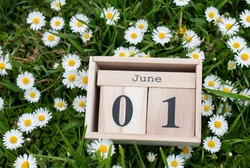 June 01, calendar organizer, the first day of summer on the green grass in white daisy colors