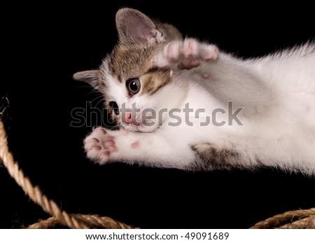 junges verspieltes Kätzchen