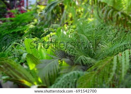 jungle Stock fotó ©