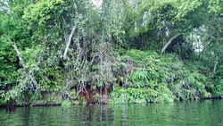 jungle at middle of lake