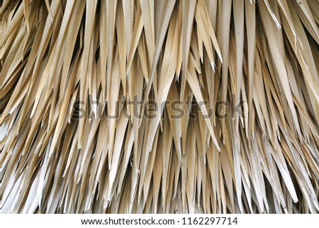 Jungle background of dead palm fronds overlapping layer of brown dry leaves. #1162297714