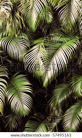Jungle background of tropic rain forest tree and leaf.