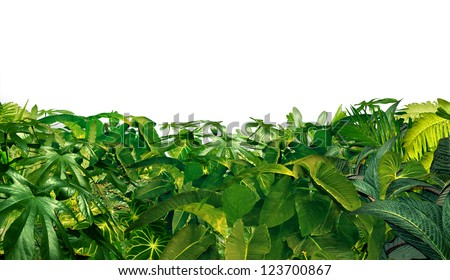 Jungle Border as a horizontal tropical plant design element with ferns and palm tree leaves found in southern hot climates as south America  Hawaii and Asia isolated on white.