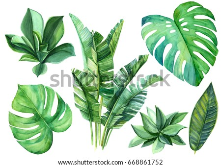 Jungle botanical watercolor illustrations, floral elements. monstera, Palm leaves and other. Tropical leaves set