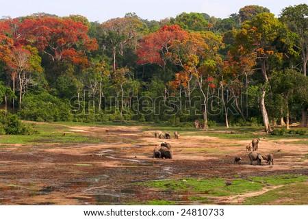 Jungle Elephants in a clearing Сток-фото ©