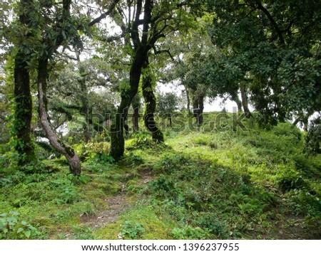 Jungle fill with lush greenery #1396237955