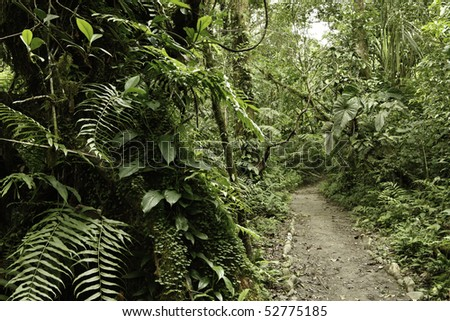 Jungle in Bolivian pre mountain tropical rain forest in Parque Carascu part of amazon basin nice green background copy space trail between evergreen trees