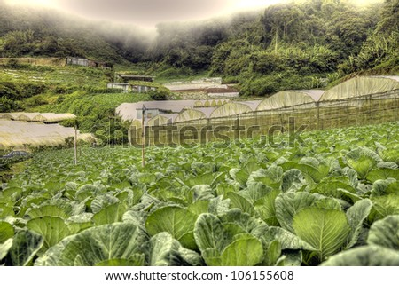 Jungle in Cameron Highlands, Malaysia
