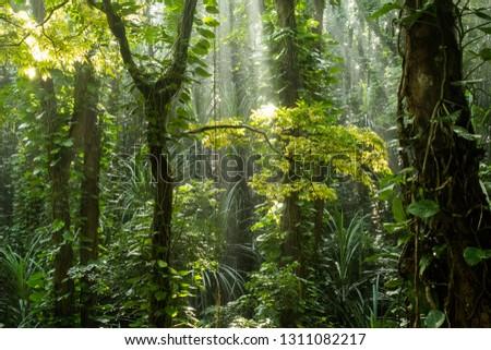 jungle in Sri Lanka  #1311082217