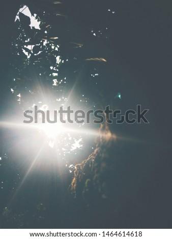 jungle, jungle, jungle.... sun bright #1464614618