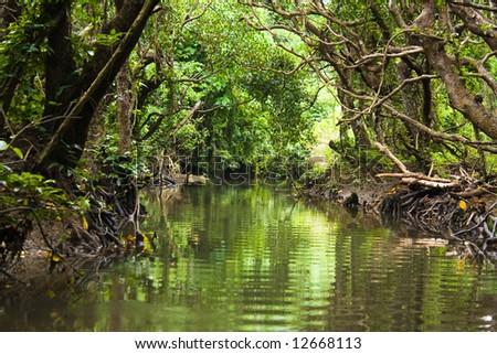 Jungle kayaking through the mangrove river