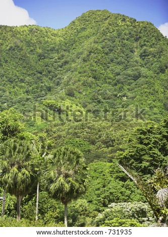 Jungle mountain