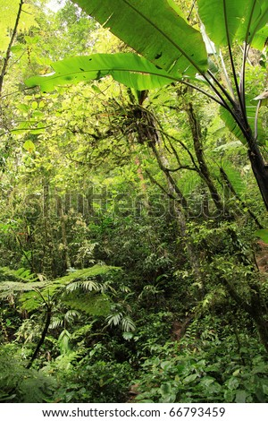 Jungle / Rainforest at Beremban Mountain - Cameron Highlands, Malaysia