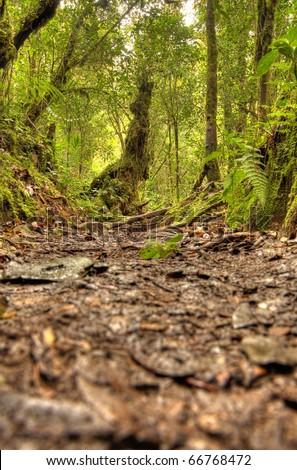 Jungle / Rainforest at Brinchang Mountain in Cameron Highlands, Malaysia