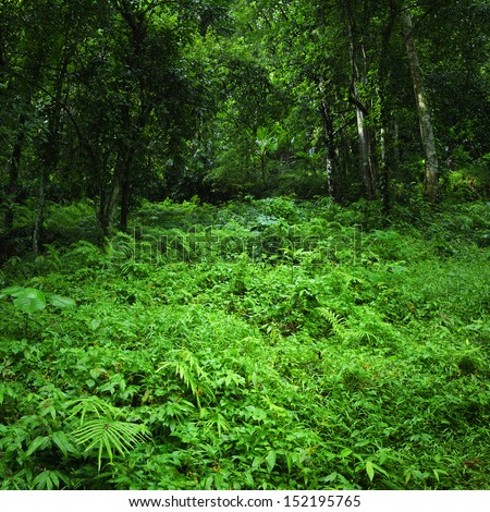 Jungle rainforest background. Dense tropic forest with fern and lush vegetation