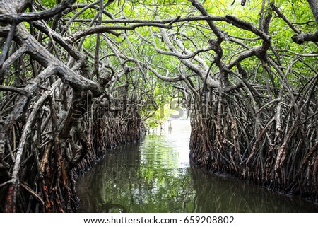 Jungle river and tropical mangroves on Ceylon