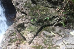 jungle tracking at royal belum ipoh perak malaysia