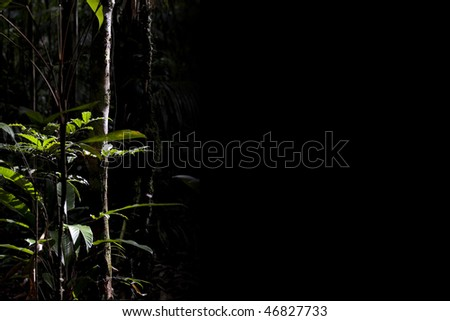 Jungle under a beam of light with blank space