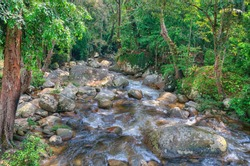 Jungle water stream