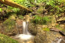 Jungle Waterfall in Cameron Highlands, Malaysia