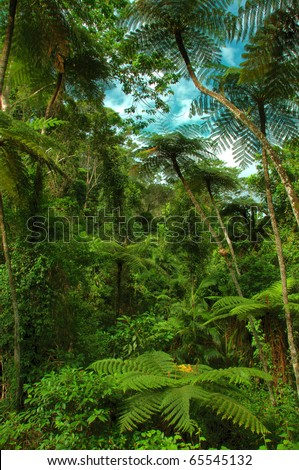 jungle with tree ferns near Kuranda, North Queensland, Australia