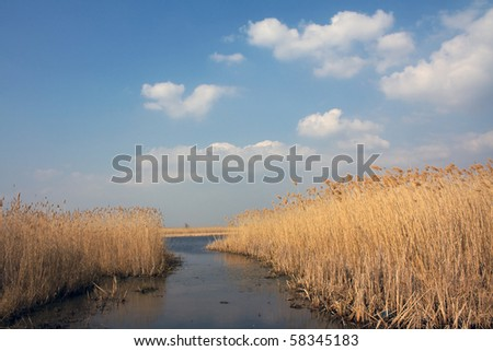 Jungles of reed on shore