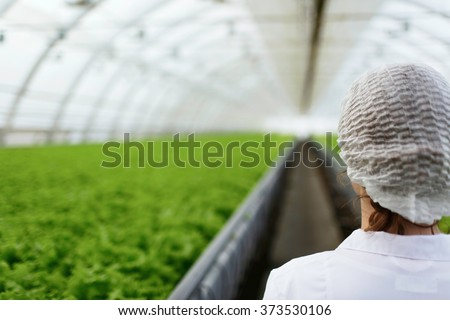 Junior agricultural scientists researching plants and diseases in greenhouse with parsley and green salad. Biotechnology woman engineer examining plant leaf for disease