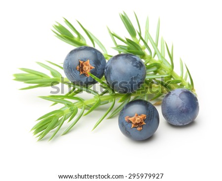 Juniper berries isolated on white background.