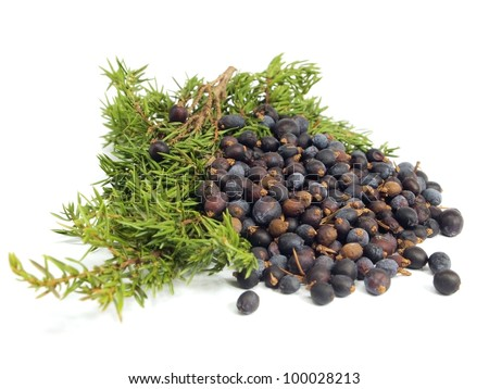 Juniper branch and berries on a white background