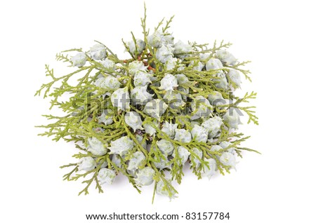 Juniper, twig with cones, close up, isolated white background